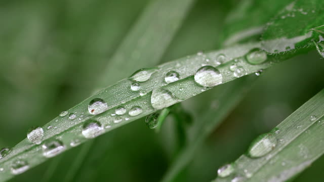 ecu blade of grass with water drops / kastel-staadt, rhineland-palatinate, germany - blade of grass点の映像素材/bロール