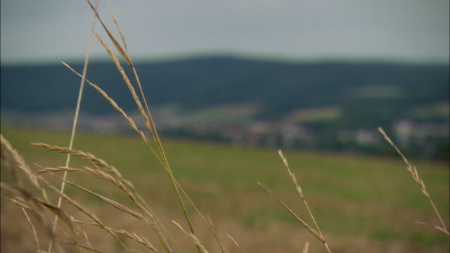 ws r/f blades of grass in foreground and townscape behind / kassel, germany - ヘッセン州点の映像素材/bロール