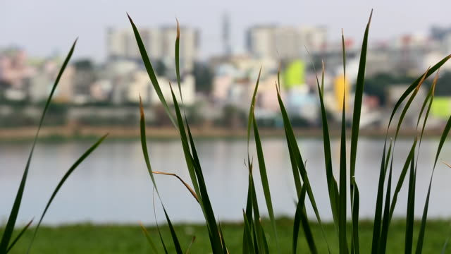 Blades of Grass in front of View of a City in India