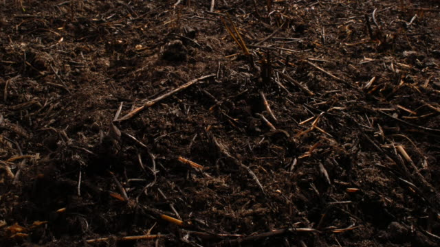 stockvideo's en b-roll-footage met blades of grass sprout from the soil. available in hd. - zaailing
