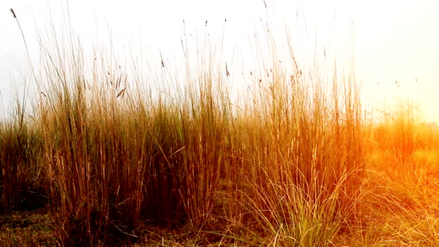 blades of grass swaying through wind in the nature. - blade of grass stock videos & royalty-free footage