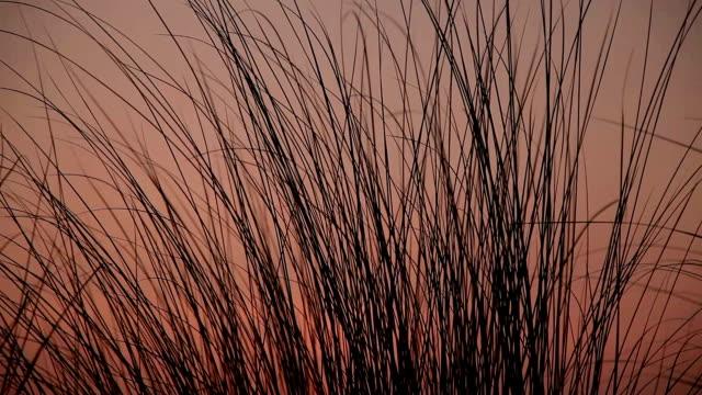 Blades of grass swing through wind