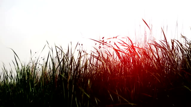 blades of grass swing through wind - blade of grass stock videos & royalty-free footage