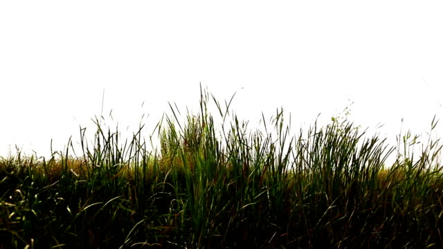 blades of grass swing through wind - blade of grass stock videos and b-roll footage