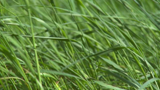 hd :ブレードの芝生 - 草地点の映像素材/bロール