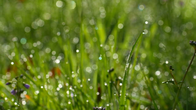 blades of grass with dew drops - blade of grass stock videos and b-roll footage