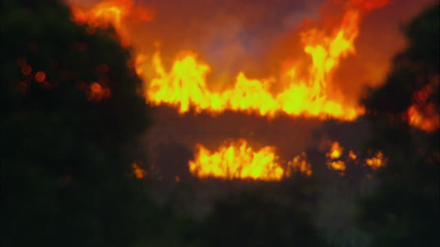 ms, blazing bush fire, australia - drought stock videos & royalty-free footage