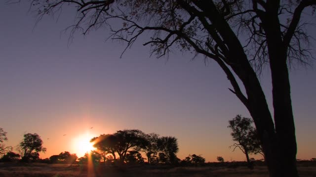 A blazing sun sinks below the African Bushveld. Available in HD.