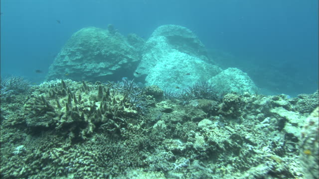 bleached, coral reef , kerfama islands , diving shot - 漂白した点の映像素材/bロール
