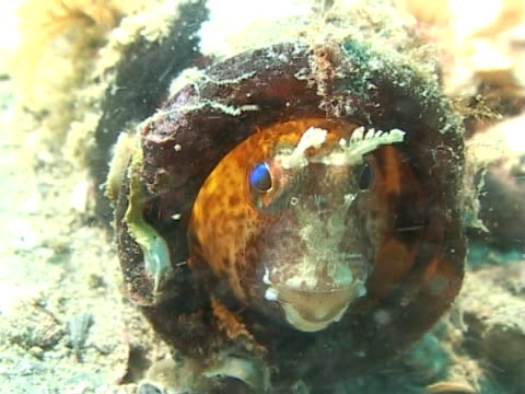 vídeos de stock, filmes e b-roll de ws blennies peeping out from his bottle home amidst seabed - parte do corpo animal