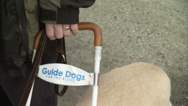 a blind man stands next to his guide dog on a sidewalk. - trained dog stock videos & royalty-free footage