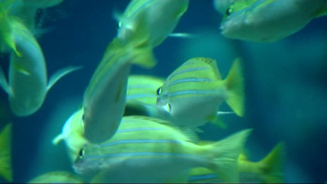 blind people benefit from music at the london aquarium england london london aquarium int shots of royal philharmonic orchestra including blind and... - clarinet stock videos & royalty-free footage