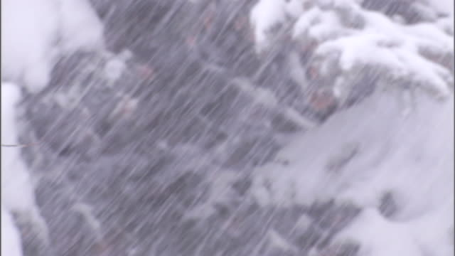 a blizzard covers a tree with snow. - blizzard stock videos & royalty-free footage