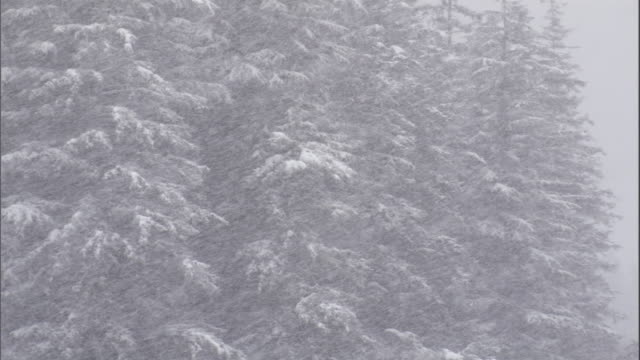 stockvideo's en b-roll-footage met a blizzard rages around a forest. available in hd. - alaska verenigde staten
