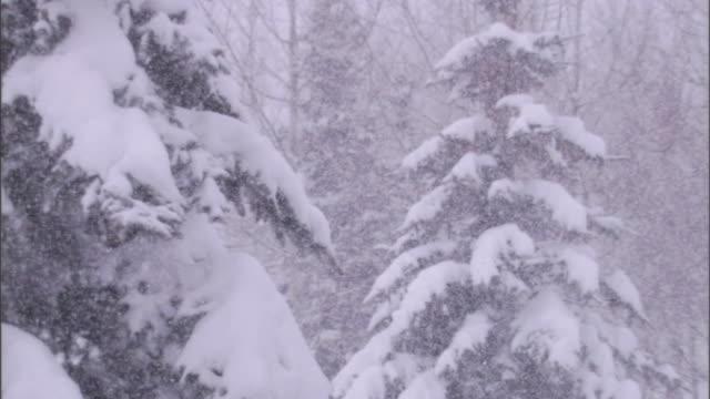 vídeos de stock, filmes e b-roll de a blizzard whitewashes a forest. - nevasca