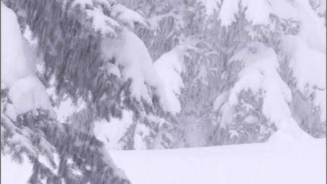 vidéos et rushes de a blizzard whitewashes a forest. - blizzard