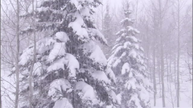 a blizzard whitewashes a forest. - blizzard stock videos & royalty-free footage