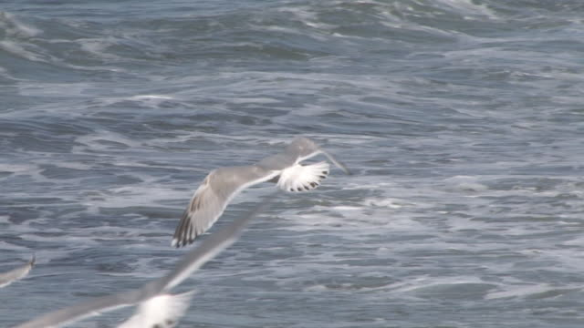Block Island seagulls 27 - HD 30F