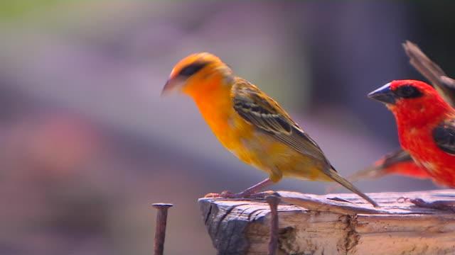 block shot bird praslin seychelles - gruppo medio di animali video stock e b–roll