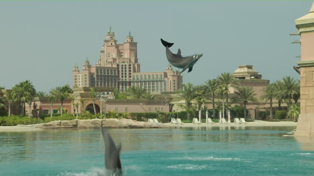 vídeos de stock e filmes b-roll de block shot dolphin jumping dubai united arab emirates - captive animals