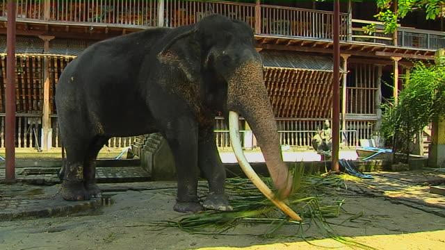 block shot elephant gangaramaya temple colombo western province sri lanka - sri lankan culture stock videos & royalty-free footage