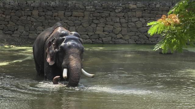 Block Shot Elephant in Water Thrissur Kerala India