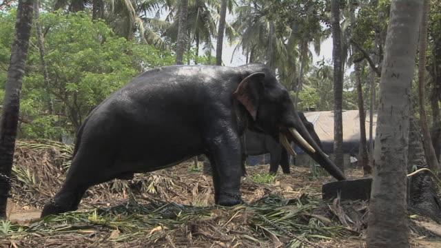Block Shot Elephant Spraying Water Thrissur Kerala India