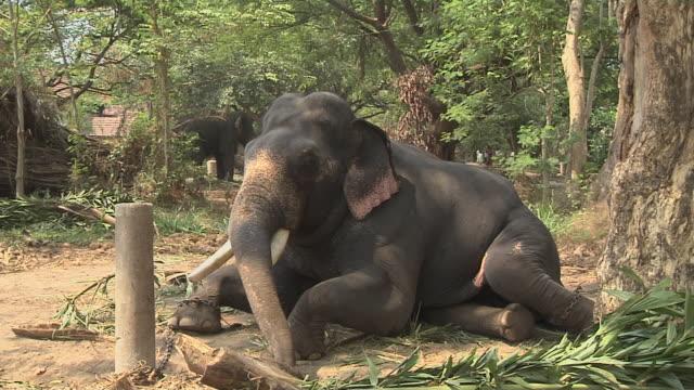 Block Shot Elephant Thrissur Kerala India