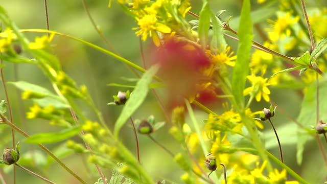 block shot flowers valley of flowers uttarakhand - 少於10秒 個影片檔及 b 捲影像