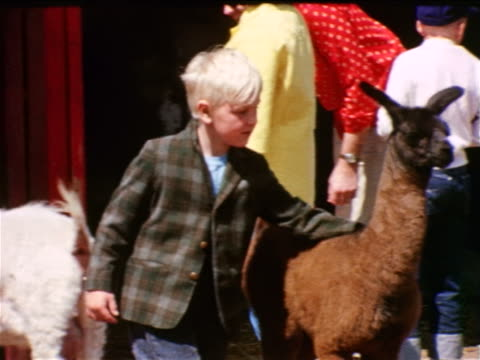 1963 blonde boy hugging llama at petting zoo / Lollypop Farm near Rochester, NY / industrial