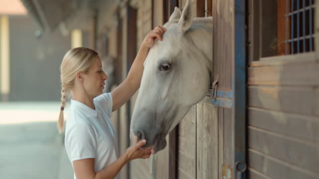 SLO MO DS Blonde female feeding her white horse in the stable