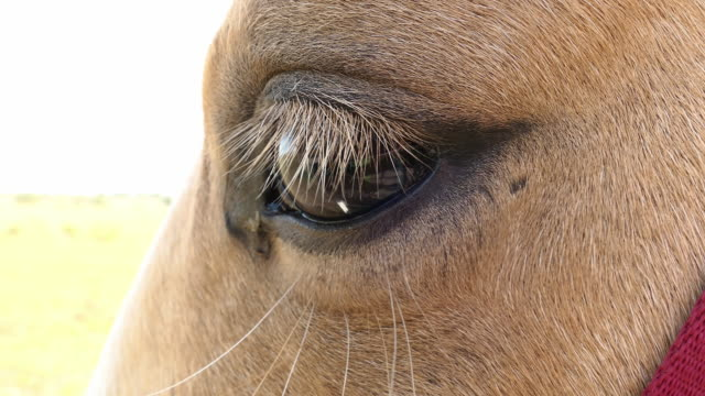 blonde horse eye close up - animal eye stock videos & royalty-free footage