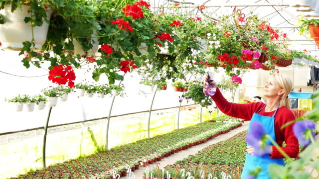 blonde mature woman working with flowers in plant nursery - plant nursery stock videos & royalty-free footage