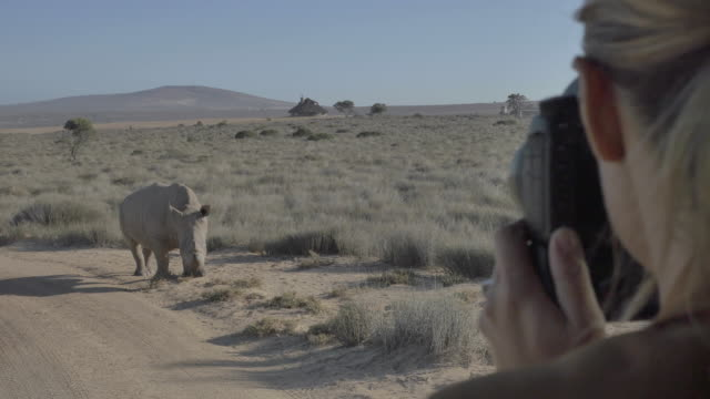 blonde woman takes photo of rhinoceros close up - mammal stock videos & royalty-free footage