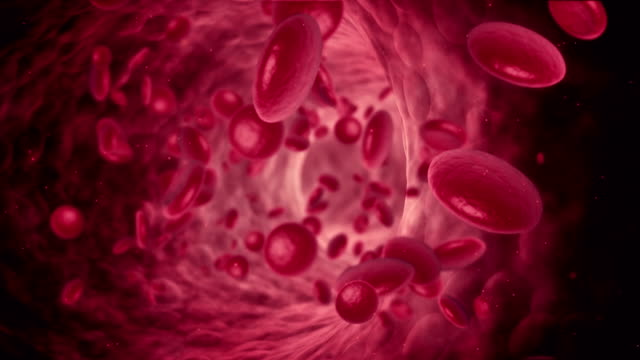Blood Cell Animation