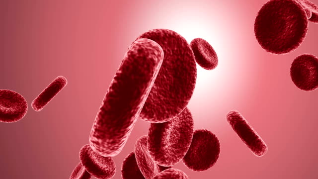 blood cells full hd video - venule stock videos & royalty-free footage