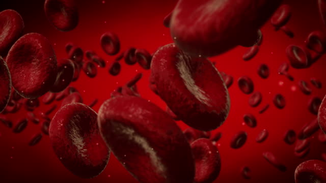 le cellule del sangue viaggio attraverso una vena - animazione biomedica video stock e b–roll