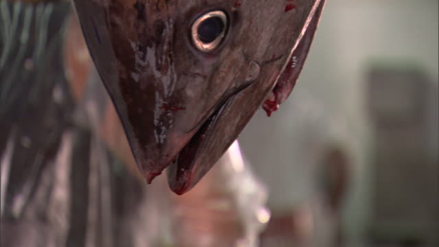 blood drips from the mouth of a hanging fresh fish. - fishing stock videos & royalty-free footage