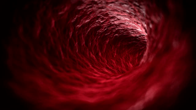 blood flow - globulo rosso video stock e b–roll