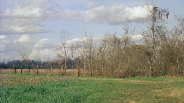 ws pan blood hounds running across field  - 1957年点の映像素材/bロール