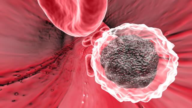 blood moving around the body - globulo bianco video stock e b–roll