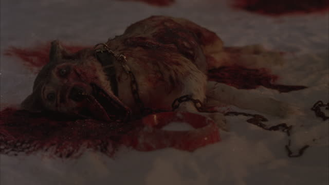 Blood saturates the snow around a mangled Husky.