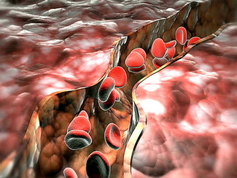 blood vessel - biomedical illustration stock videos & royalty-free footage
