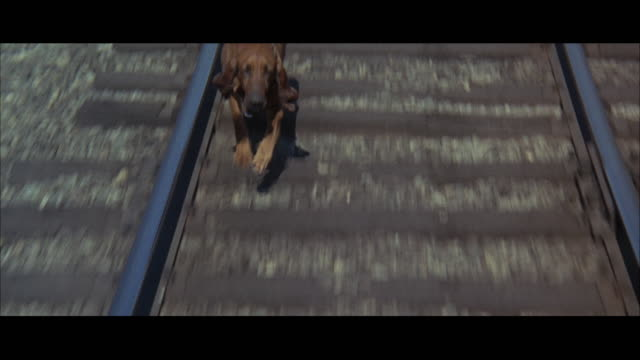 1967 rear pov bloodhound running along railroad track, following train - pursuit concept stock videos & royalty-free footage