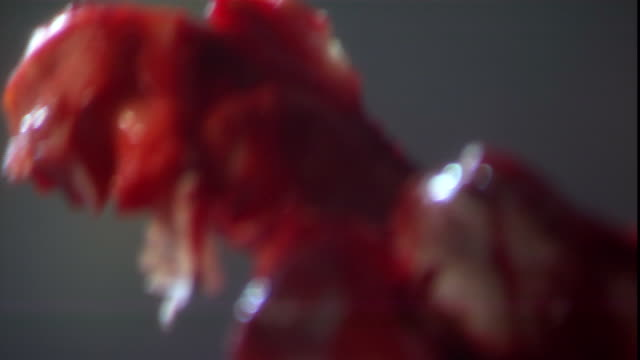 a bloody shank of bone juts from a table full of gore. - bloody gore stock videos & royalty-free footage