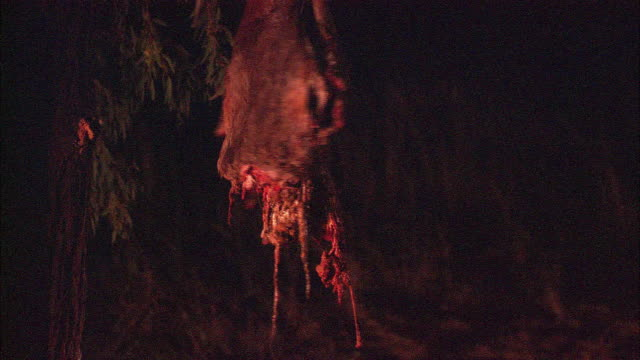 A bloody, shredded carcass hangs from a tree.