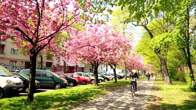 blühenden kirschbaum blumen - frühling stock-videos und b-roll-filmmaterial