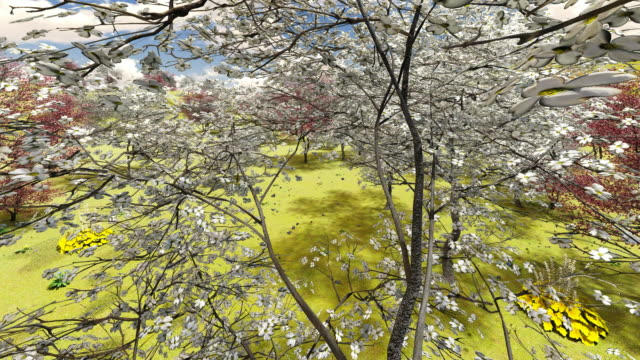 blooming dogwood orchard - dogwood stock videos & royalty-free footage