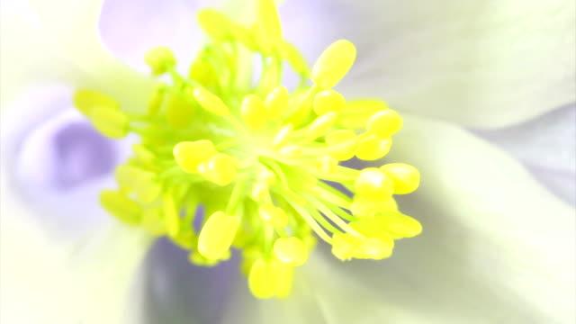 Blooming flower macro