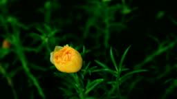Blooming flower.